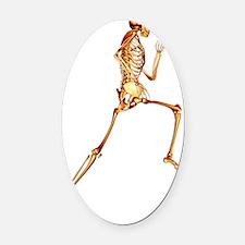 Skeleton running Oval Car Magnet