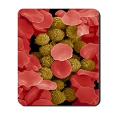 Red and white blood cells, SEM Mousepad