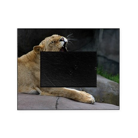 female african lion 4 picture frame by admin cp39664445. Black Bedroom Furniture Sets. Home Design Ideas