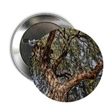 "y mesquite tree 2.25"" Button"