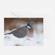 Wood pigeon in snow Greeting Card
