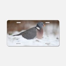 Wood pigeon in snow Aluminum License Plate