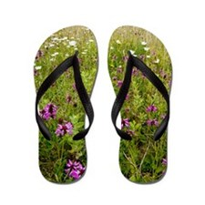 Wildflower meadow, Dorset Flip Flops