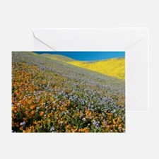 Wildflowers, California Greeting Card