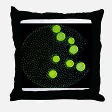 Volvox colony, light micrograph Throw Pillow