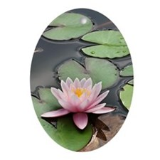 Water Lily (Nymphaea sp.) Oval Ornament