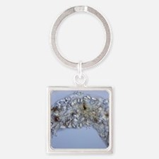 Water bear, light micrograph Square Keychain
