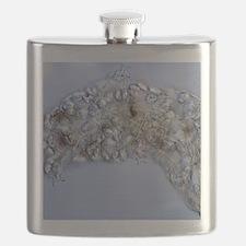 Water bear, light micrograph Flask