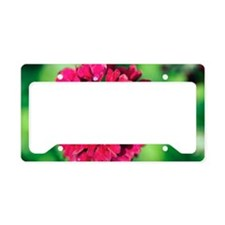 Verbena 'Claret' License Plate Holder