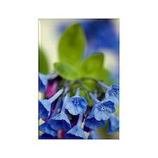 Virginia Bluebells (Mertensia vir Rectangle Magnet