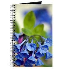 Virginia Bluebells (Mertensia virginica) Journal