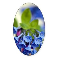 Virginia Bluebells (Mertensia virgi Decal
