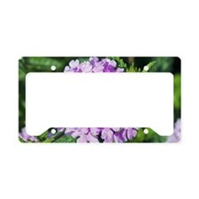 Verbena 'La France' License Plate Holder