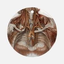 Vascular anatomy, historical artwor Round Ornament