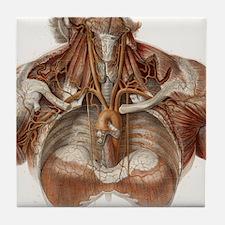 Vascular anatomy, historical artwork Tile Coaster