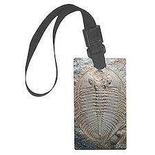 Trilobite fossil Luggage Tag