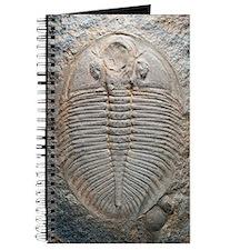 Trilobite fossil Journal