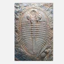 Trilobite fossil Postcards (Package of 8)