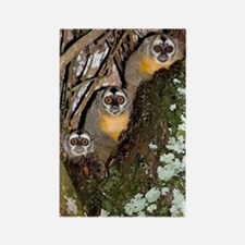 Three-striped owl monkeys Rectangle Magnet