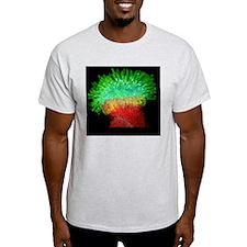 Thale cress stigma, micrograph T-Shirt
