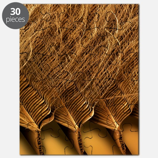 Tawny owl feather detail, SEM Puzzle