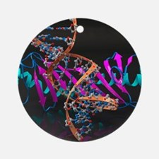 Tata binding protein with DNA Round Ornament