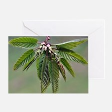 Sweet chestnut spring growth Greeting Card