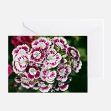 Sweet Williams (Dianthus sp.) Greeting Card