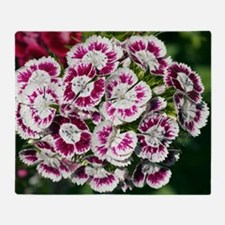 Sweet Williams (Dianthus sp.) Throw Blanket