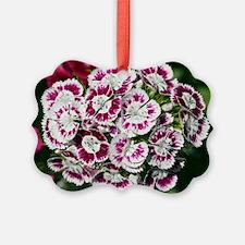 Sweet Williams (Dianthus sp.) Ornament