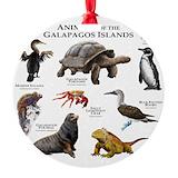 Galapagos iguana Round Ornament