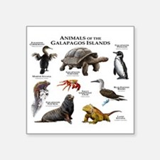 """Animals of the Galapagos Is Square Sticker 3"""" x 3"""""""