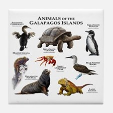 Animals of the Galapagos Islands Tile Coaster