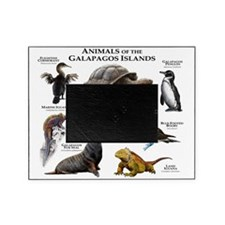 Animals of the Galapagos Islands Picture Frame