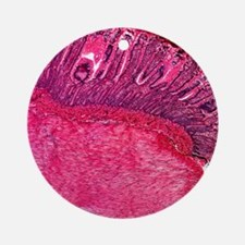 Stomach section, light micrograph Round Ornament
