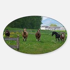 Circle f herd 10 x 8 Decal