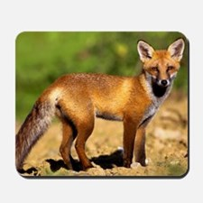 Young fox Mousepad