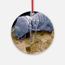 Worker termite, SEM Round Ornament