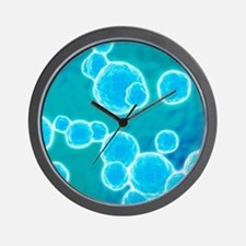 MRSA bacteria, artwork Wall Clock