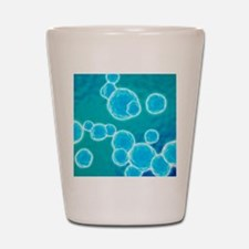 MRSA bacteria, artwork Shot Glass
