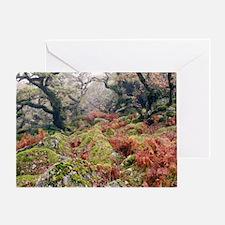 Wistman's Wood, Dartmoor Greeting Card