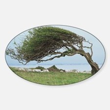 Wind-blown tree Decal