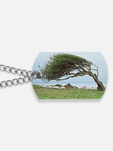Wind-blown tree Dog Tags