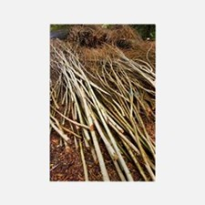 Willow sticks Rectangle Magnet