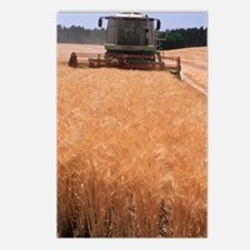 Wheat harvest Postcards (Package of 8)
