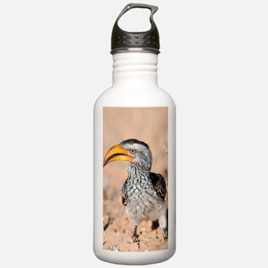 Southern yellow-billed Water Bottle