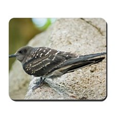 Sooty tern chick Mousepad