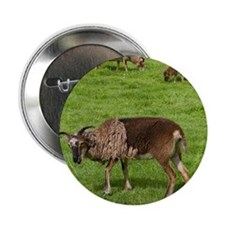 "Soay Sheep (Ovis aries) 2.25"" Button"