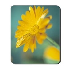 Marigold flower Mousepad