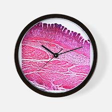 Small intestine section, light microgra Wall Clock